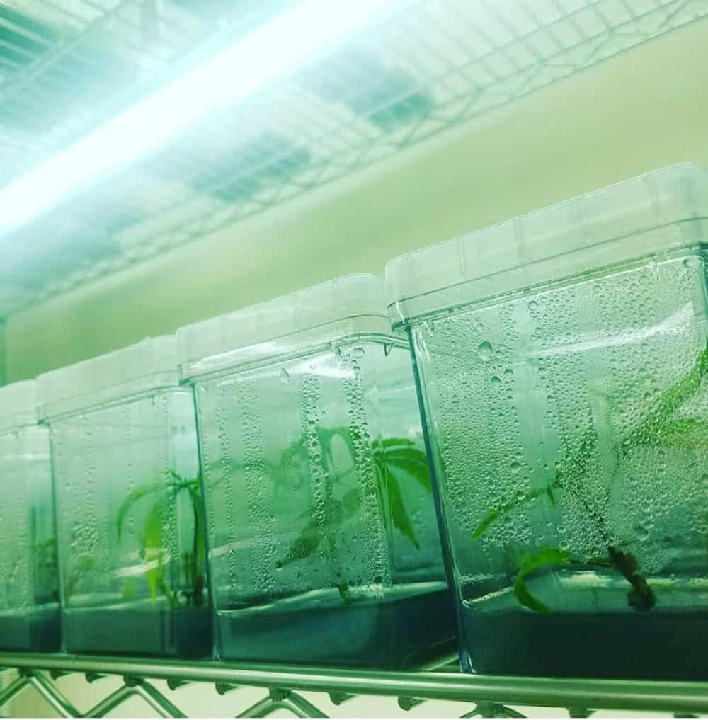Everything you've ever wanted to know about tissue culture